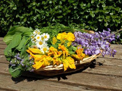 Erbe selvatiche e fiori spontanei
